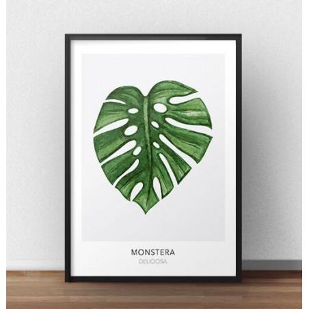 """Skandynawski plakat """"Monstera"""""""