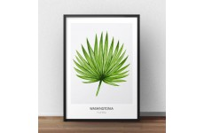 """Skandynawski plakat na ścianę """"Washingtonia filifera"""" na delikatnie szarym tle"""
