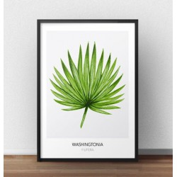"Skandynawski plakat ""Washingtonia"""