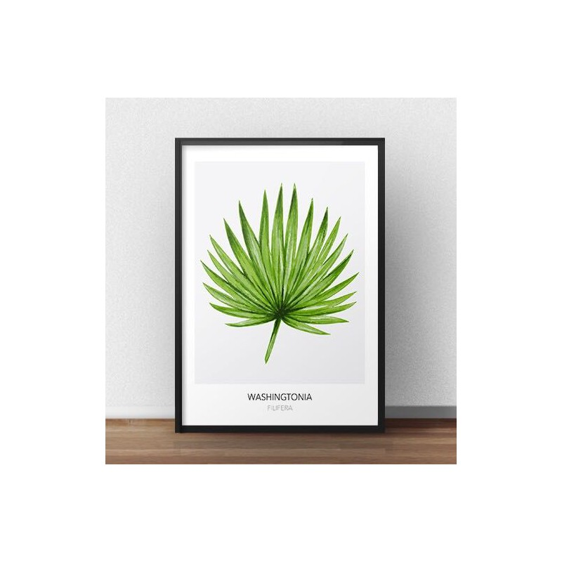 Skandynawski plakat Washingtonia