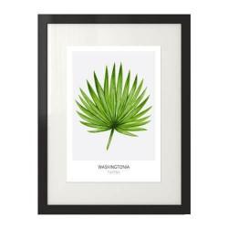 """Nowoczesny plakat na ścianę z liściem """"Washingtonia filifera"""" na szarym tle"""