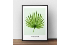 """Skandynawski plakat z rośliną """"Washingtonia filifera"""" na seledynowym tle"""