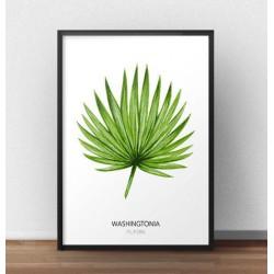 """Grafika na ścianę z liściem palmowym """"Washingtonia filifera"""" na białym tle"""