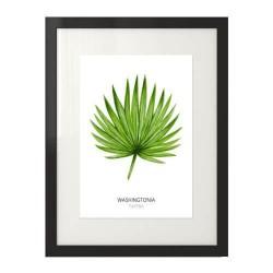 """Nowoczesny plakat na ścianę z liściem """"Washingtonia filifera"""""""