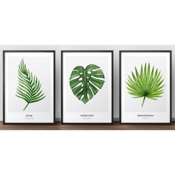 Zestaw 3 plakatów botanicznych - liście
