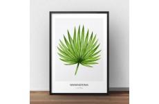 Plakat z zielonym liściem Washingtonia