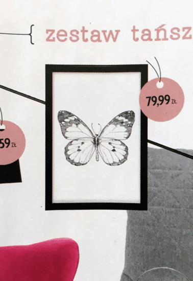 Plakat z motylem marki Scandi Poster w magazynie Cztery Kąty